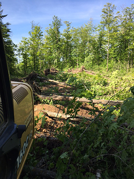 Lot and Land Clearing